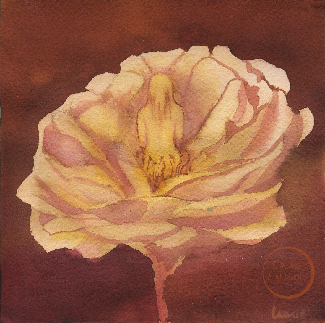 sunset rose 2 L